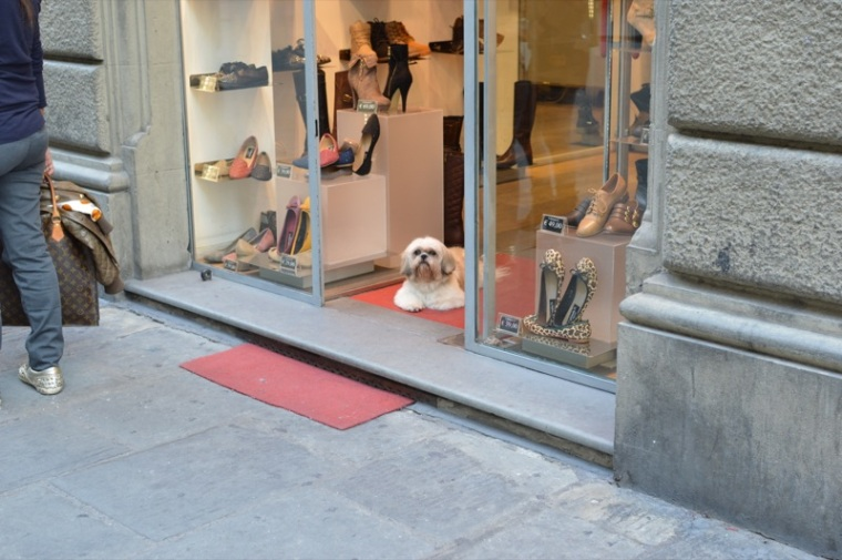 Florence shopping pup